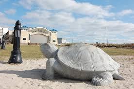 Turtles on the Island